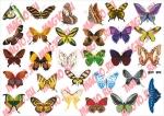 Лист с наклейками Бабочки